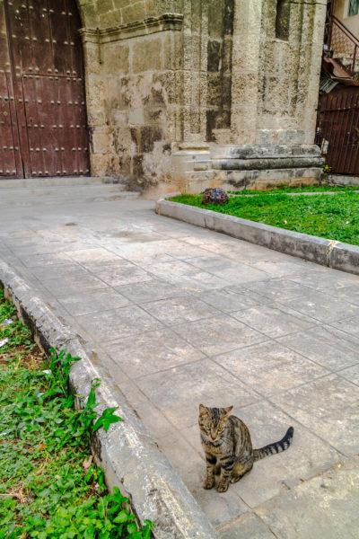 Cristo Plaza cat