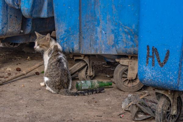 Havana Vieja dumpster cat