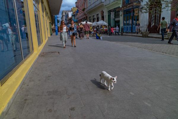 Havana Catwalk